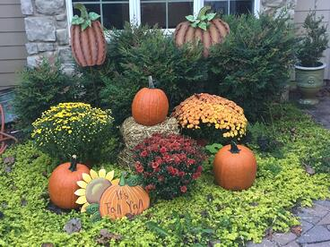 Pumpkins from Larriland Farm